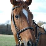 Thumb horse portrait